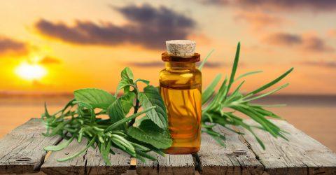 Gyógynövényekkel az egészséges emésztőrendszerért!